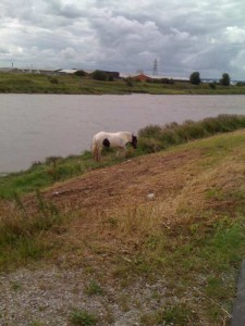 A horse grazing on the Dee coastal path.