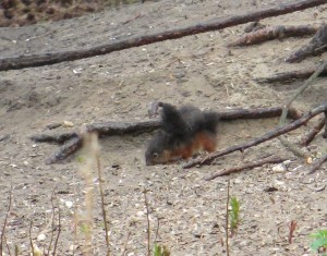 A Squirrel we discover