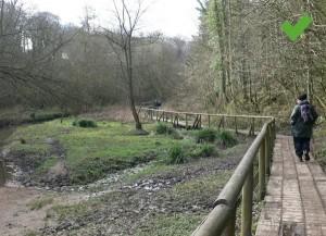 Wepre Woods
