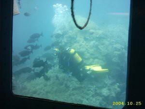 diver_fish