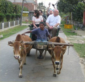 oxcart1