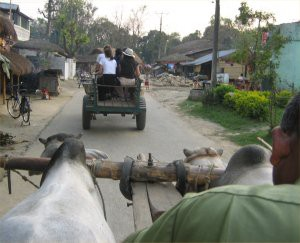 oxcart2