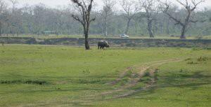 rhinowalk1