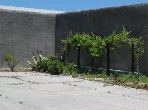 rigarden