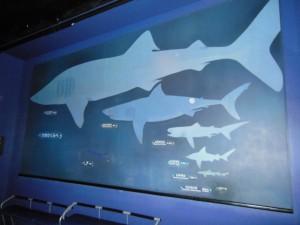 shark_size