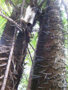 spiketree