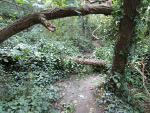 A path running through the forest
