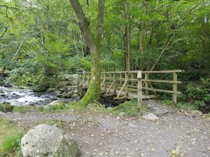 A forest scene in the Snowdonia national park.
