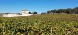The Vinyard at Chinchilla wine