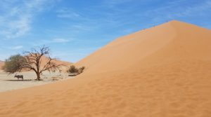 High sand dune with an Oryx sheltering under a tree