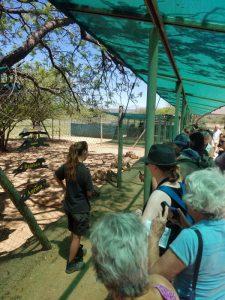 Cheetah Conservation Foundation.