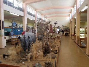 Animals in the Swakopmund museum