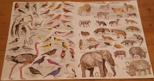 A pictorial book of animals in the Etosha national park
