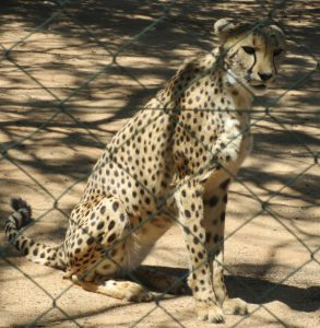 Cheetah Sanctuary